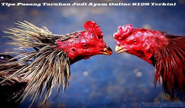 Tips Pasang Taruhan Judi Ayam Online S128 Terkini